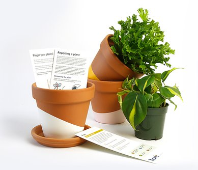 Horti Monthly Houseplant Subscription