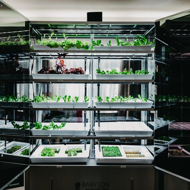 Babylon Micro-Farm